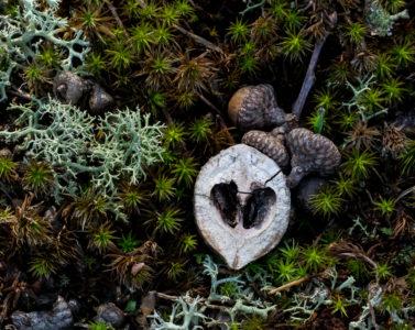 Acorns and Moss