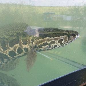 snake-thing